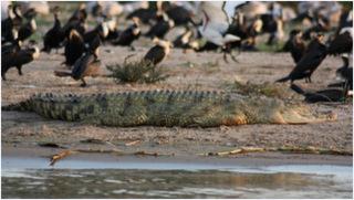 weltwaerts-afrika-natur-krokodil